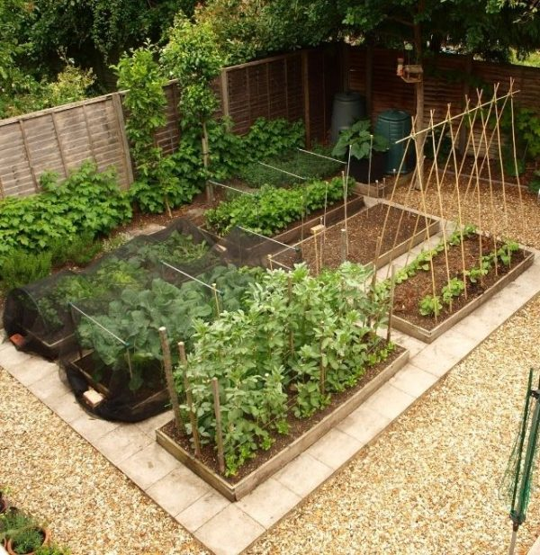 Free Vegetable Garden Layout Plans And, How To Make A Small Backyard Vegetable Garden