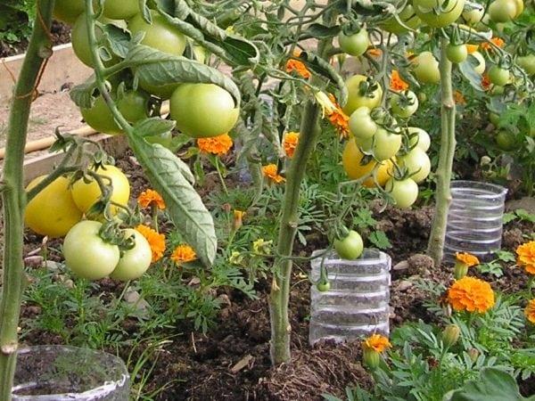 27 Vegetable Garden Ideas To Grow More, How To Make A Small Backyard Vegetable Garden
