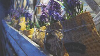 Best Container Gardening Fruit