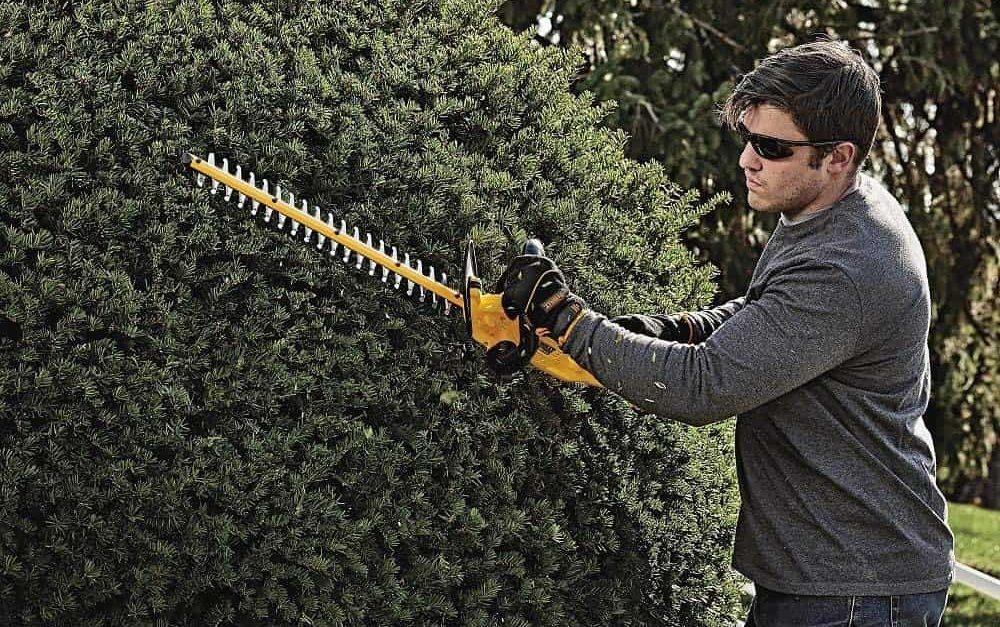 best hedge trimmer