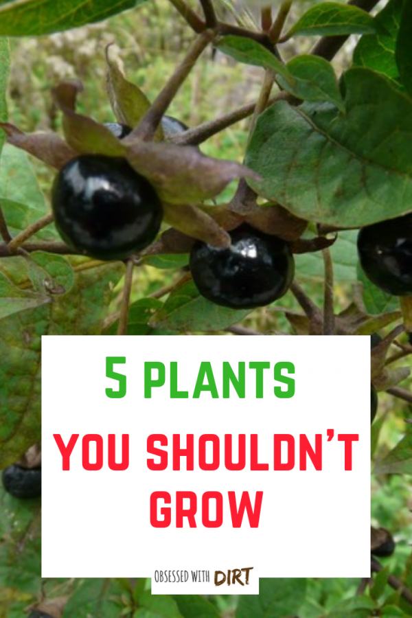 plants you shouldn't grow
